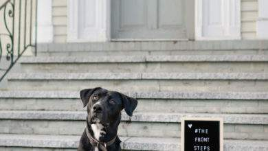 Photo of Local Photographer's Front Porch Project Leaves the Light on for Shelter Pets